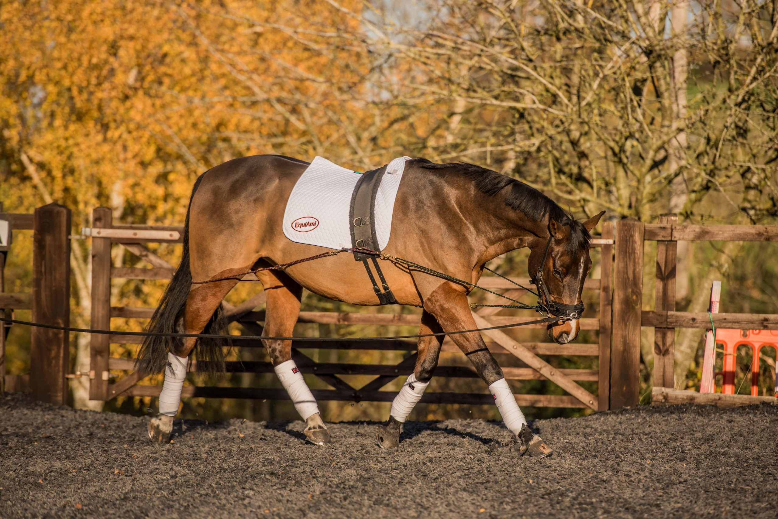 How to make lunging interesting for you and your horse