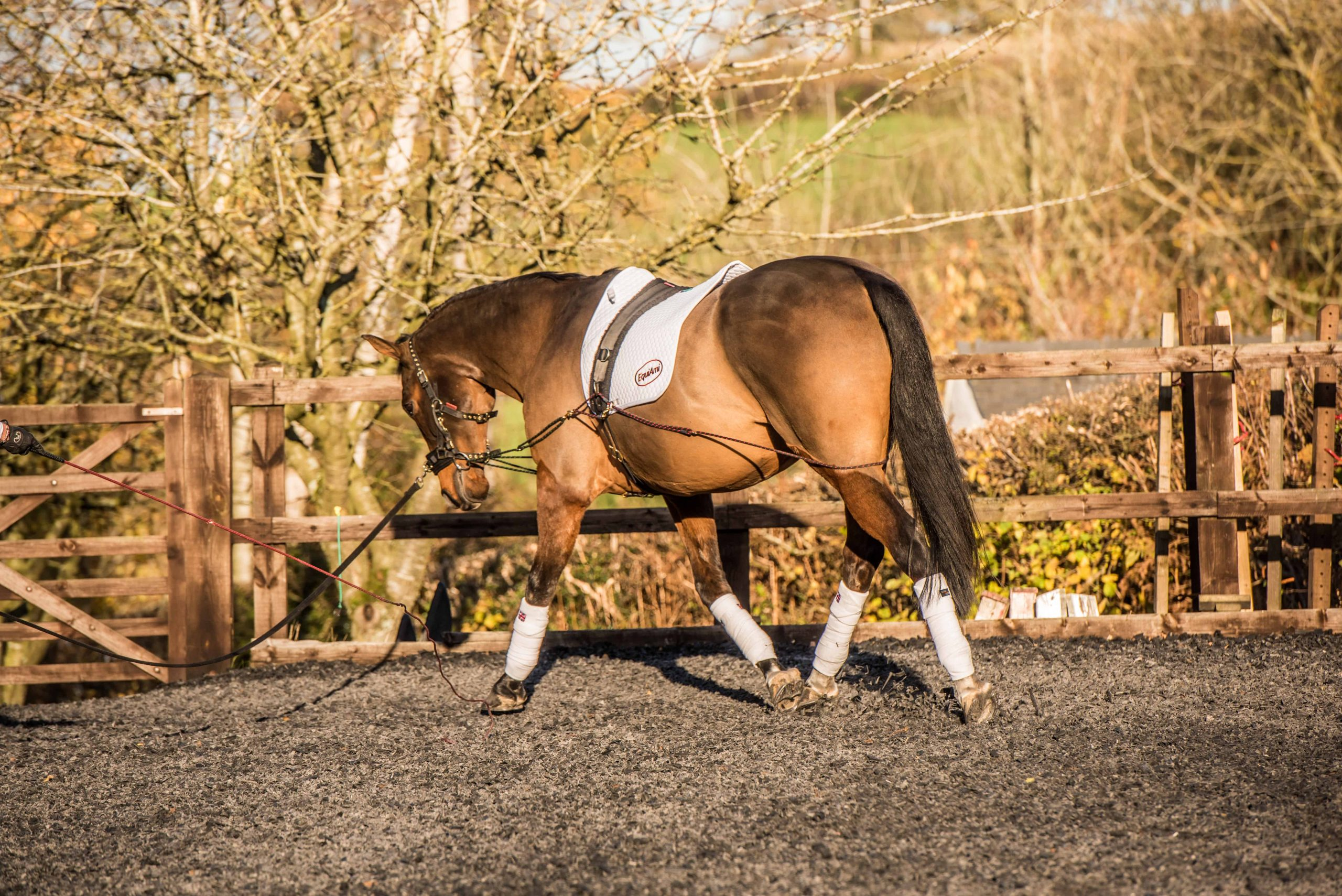 Why the EquiAmi Lunge Aid is the perfect tool to keep your horse fit during COVID-19